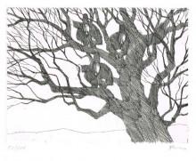 Paul Flora - Drei Unglücksraben im Baum