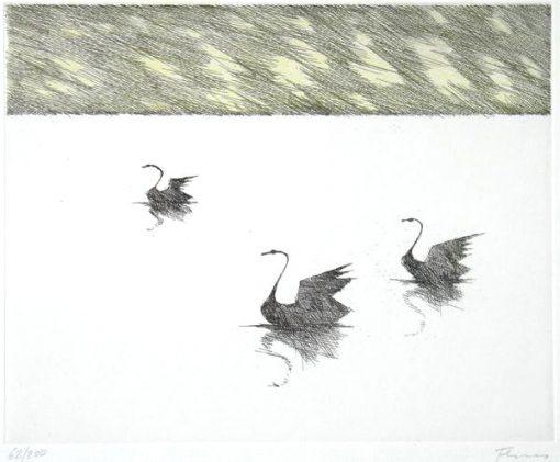 Paul Flora Radierung Drei schwarze Schwäne
